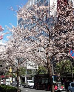 2015年桜♪